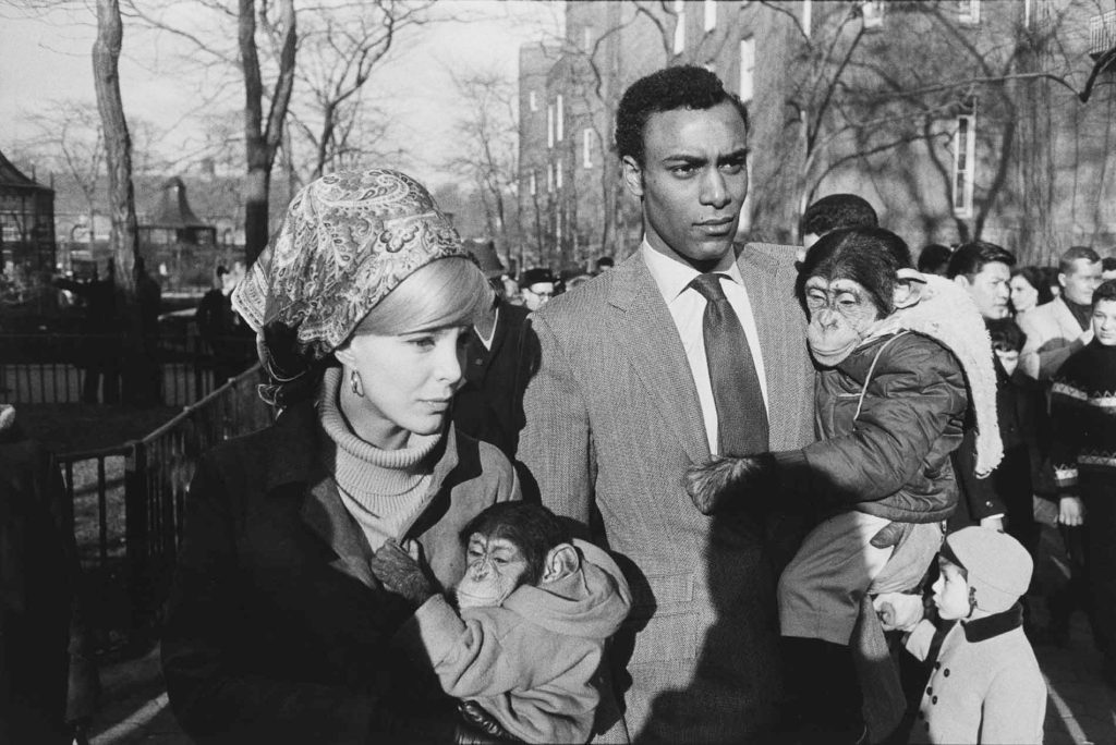 warri_winogrand_new-york-1963_zoo_6